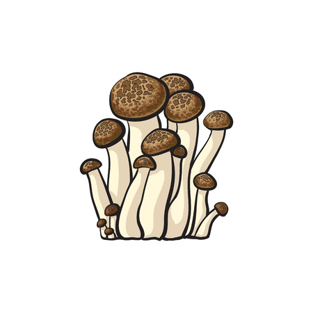 Brown beech mushrooms icon. Hand drawn edible fungus. Sketch style natural organic vitamin food. Healthy vegetarian gourmet ingredient. Vector isolated illustration Vettoriali