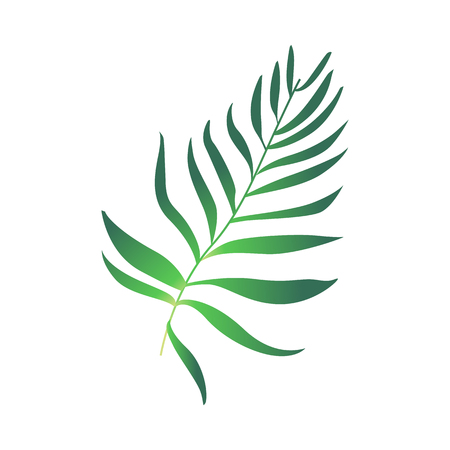 Green fern plant leaf icon. Tropical beach party, natural exotic vacation summer floral object. Vector isolated illustration in cartoon style