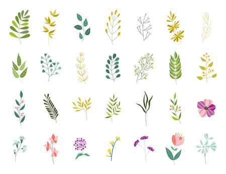 Vector flat abstract green plant herb set icon. Wild meadow field garden spring easter women day romantic holiday wedding invitation card decoration element summer floral Illustration white background