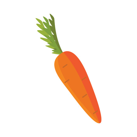 Ripe raw carrot with green halm leaves icon. Orange healthy food, vegetable full of vitamins. Fresh nutritions source, dieting and healthy life style symbol. Vector flat illustration isolated