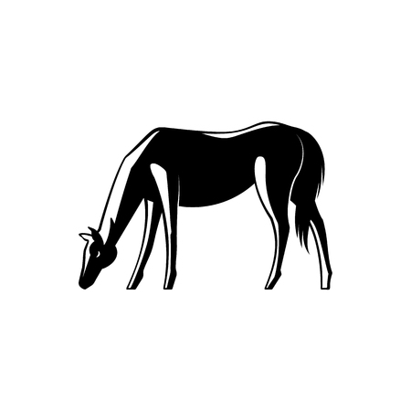Black and white horse standing sideways with its head down and grazing isolated on white background. Vector illustration of eating domestic farm animal side view. Illustration