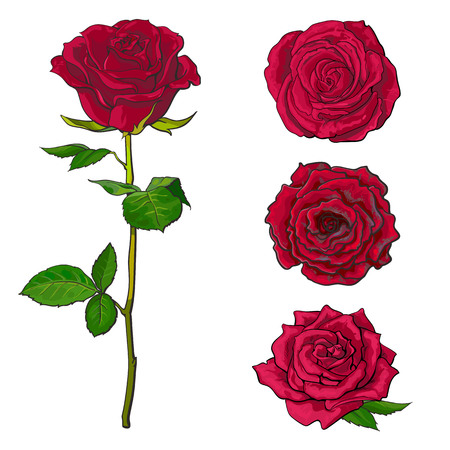 Red rose blooms set with branch of summer flower and different buds in sketch style isolated on white background. Collection of various hand drawn rose blossoms, vector illustration.