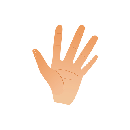 Human hand showing five fingers isolated on white background. Open palm gesture with stop or hello meaning. Cartoon vector illustration of body part - wrist with high five sign.