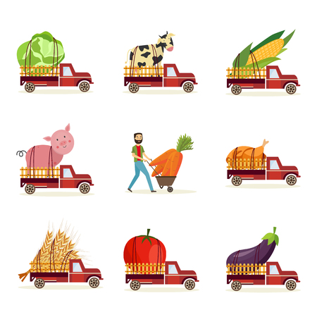 Farming harvest and delivery of fresh organic food set with extra large agricultural products in back of truck car and farmers wheelbarrow isolated on white background in flat vector illustration.