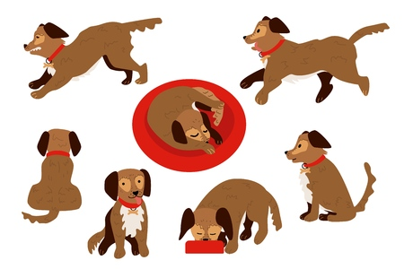 Flat style cute dog animal in different positions and actions set. Sleeping curled up, running, eating from bowl, sitting funny puppy pet character. Vector illustration isolated.