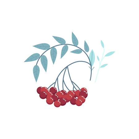 Delicious cranberry branch with red berries and leaves. Thanksgiving holiday and autumn harvest seasonal symbol. Tasty natural ingredient for juice, jam design full of vitamins. Vector illustration Ilustracja