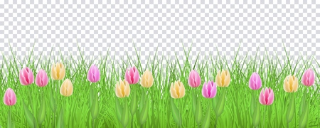 Spring floral border with colorful tulips on green grass on transparent background. Decorative frame with fresh seasonal flowers on lawn in vector illustration - beautiful blooms and greenery.
