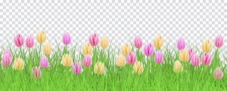 Grünes Wiesengras, Tulpenblumen-Grenzrahmen, Schablone auf transparentem Hintergrund. Frühlings-Sommer-Verkaufsschablone für Einzelhandelsplakat und Werbedesign mit Textraum. Vektorillustration