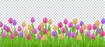 Erba di prato verde, cornice bordo fiori tulipano, modello su sfondo trasparente. Modello di vendita primavera estate per poster al dettaglio e design pubblicitario con spazio di testo. Illustrazione vettoriale Vettoriali