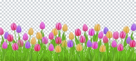 Green meadow grass, tulip flowers border frame, template on transparent background. Spring summer sale template for retail poster and advertising design wtih text space. Vector illustration Stok Fotoğraf - 104140029