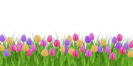 Borde floral de primavera con tulipanes de colores sobre hierba verde fresca aislada sobre fondo blanco - marco decorativo con hermosas flores de temporada en vegetación en la ilustración vectorial.