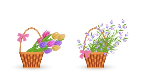 Spring floral bouquets in wicker basket set with gathered fresh tulips and blue wild flowers with green leaves isolated on white background. Beautiful blooms in straw basket in vector illustration.