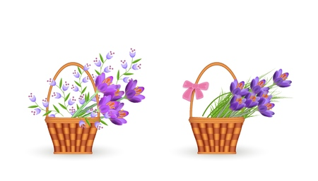 Spring floral bouquets in wicker baskets set with gathered fresh crocuses and blue wild flowers with green leaves isolated on white background - beautiful blooms in vector illustration.