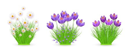 Floral bundles of different widths set with fresh crocuses and chamomiles on green grass isolated on white background. Beautiful spring and summer flowers on greenery in vector illustration. Ilustracja