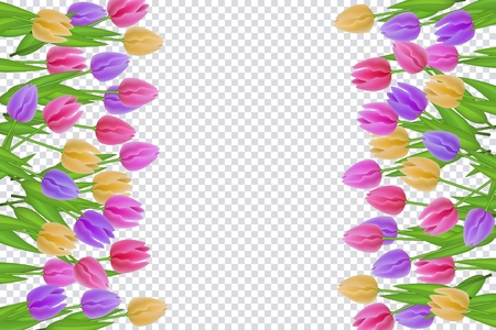Spring floral border with colorful tulips with green leaves on transparent background. Decorative frame with beautiful fresh seasonal flowers and greenery in vector illustration.