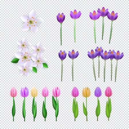 Spring flowers set on transparent background consisting of fresh crocus, cherry or apple blossoms and colorful tulips - decorative elements for your design in cartoon vector illustration. Ilustração