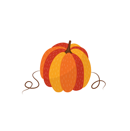Ripe orange pumpkin - autumn natural element for seasonal design in flat style. Vector illustration of fall vegetable isolated on white background - object of farm crop. Ilustração