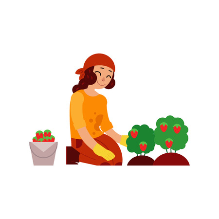 Young woman farmer gathering ripe strawberries from bushes isolated on white background - female character with red mature berries for eco-friendly and organic concept in flat vector illustration. Illustration