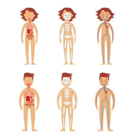 Human internal organs in male and female bodies set with schematic images of gastrointestinal tract, skeletal and cardiovascular system isolated on white background. Vector illustration.