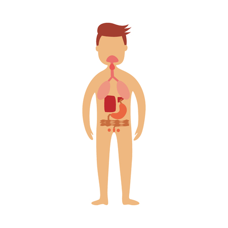 Human gastrointestinal tract - schematic depiction of location of digestive parts. Scheme of internal organs in male body for health care concept. Flat isolated anatomical vector illustration.