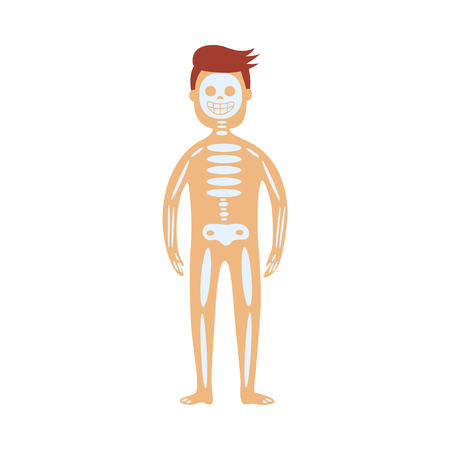 Human skeletal system in male body - schematic depiction of location of skull, spine and bones. Flat isolated diagram of internal organs for health care concept. Anatomical vector illustration.
