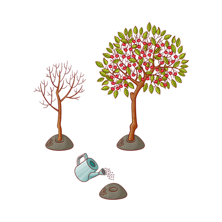 Tree planting stages, symbols set. Green apple tree with fruits and foliage, sprouting seedling into growing tree without foliage, watering can pouring seed. Vector sketch illustration