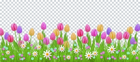 Hierba verde del prado, marco de la frontera de las flores de la margarita del tulipán, plantilla en fondo transparente. Plantilla de venta de primavera verano para carteles minoristas y diseño publicitario con espacio de texto. Ilustración vectorial