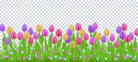 Erba di prato verde, cornice bordo fiori tulipano, modello su sfondo trasparente. Modello di vendita primavera estate per poster al dettaglio e design pubblicitario con spazio di testo. Illustrazione vettoriale