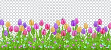 Hierba verde del prado, marco de la frontera de las flores del tulipán, plantilla en fondo transparente. Plantilla de venta de primavera verano para carteles minoristas y diseño publicitario con espacio de texto. Ilustración vectorial