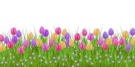 Erba di prato verde, cornice di confine di fiori di campanula di tulipano, modello su sfondo isolato. Modello di vendita primavera estate per poster al dettaglio e design pubblicitario con spazio di testo. Illustrazione vettoriale Vettoriali