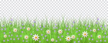 Grünes Wiesengras, Gänseblümchenkamille blüht Grenzrahmen, Schablone auf transparentem Hintergrund. Frühlings-Sommer-Verkaufsschablone für Einzelhandelsplakat und Werbedesign mit Textraum. Vektorillustration