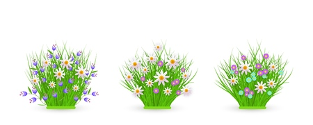 Spring and summer floral bundles of different widths set with fresh white chamomiles and wild little flowers on green grass - beautiful seasonal blooms on greenery in isolated vector illustration.