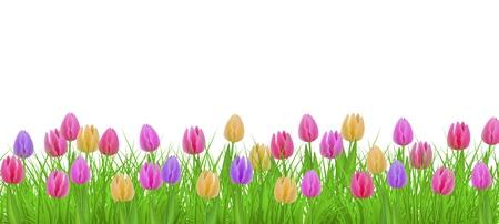 Hierba verde del prado, marco de la frontera de las flores del tulipán, plantilla en fondo aislado. Plantilla de venta de primavera verano para carteles minoristas y diseño publicitario con espacio de texto. Ilustración vectorial Ilustración de vector
