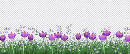 Borde floral de primavera con azafranes violetas brillantes y pequeñas flores silvestres azules sobre hierba verde fresca sobre fondo transparente - marco decorativo con flores y vegetación en la ilustración vectorial.