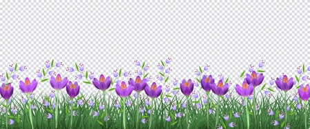 Spring floral border with bright purple crocuses and little blue wild flowers on fresh green grass on transparent background - decorative frame with blooms and greenery in vector illustration.