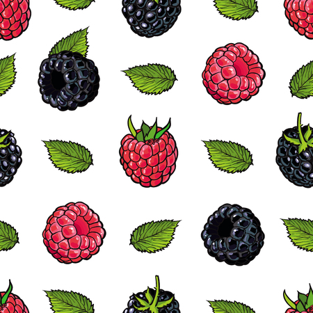Raspberry and blackberry seamless pattern with fresh ripe fruits and green leaves in sketch style on white background - hand drawn summer backdrop with sweet food in vector illustration.