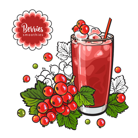 Red currant smoothie in sketch style isolated on white background - cool drink with blended fresh ripe berries and ice in glass. Vitamin beverage with fruits in vector illustration. Zdjęcie Seryjne - 107261501