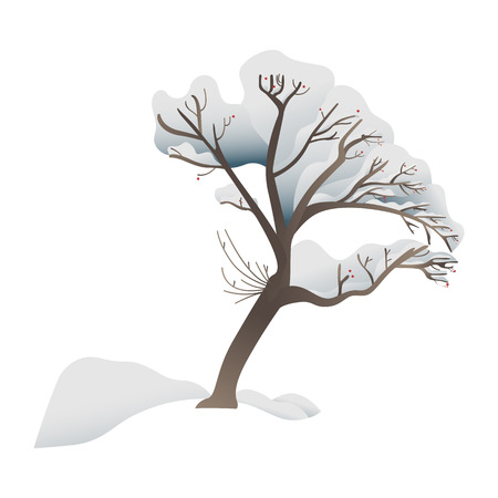 Snowy tree vector illustration - forest or park plant covered with snow isolated on white background. Winter decorative element for seasonal natural design in flat style. Illustration