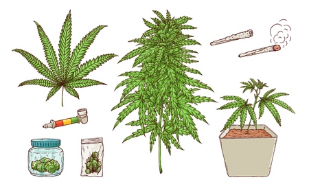 Collection de croquis de fumer du cannabis de vecteur. Plante de marijuana verte en pot, feuilles vertes, bourgeons mûrs, haschich en paquet, bong, joint de papier, bout à bout et joint de mauvaises herbes. Illustration isolée