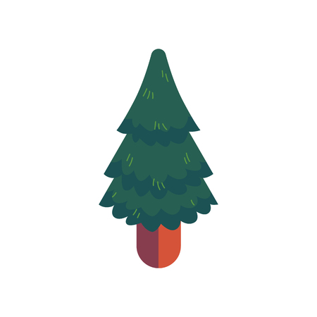 Green spruce vector illustration in flat style - evergreen pine tree for natural design. Fir-tree of conical form - forest or park coniferous decorative element isolated on white background.