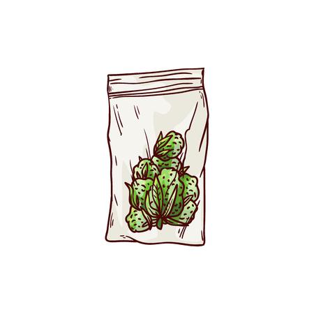 Germogli maturi della cannabis di vettore nell'icona di schizzo del pacchetto. Pianta di canapa verde, simbolo di droga fumante legalizzato, erba di marijuana, può essere utilizzata nella progettazione medica. Illustrazione isolata Vettoriali