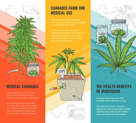 Vector cannabis farm for medical use, health benifits of marijuana concept poster set with weed plant in pot,gGreen hemp with leaves, ligalized smoking drug symbol Isolated illustration Stock Vector - 113631722