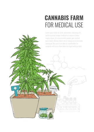 Vector cannabis farm for medical use concept poster with weed plant in pot. Green hemp with leaves, ligalized smoking drug symbol, marijuana herb, can be used in medical design. Isolated illustration Illustration