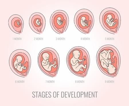 Étapes du mois de l'embryon de l'ensemble d'illustrations vectorielles de développement isolé sur fond rose. Processus de croissance fœtale humaine dans un style dessiné à la main pour l'infographie sur les soins de santé de la grossesse et de la mère et du bébé.