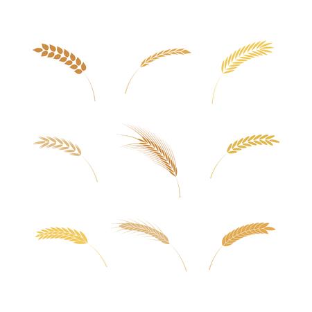 Illustrazione vettoriale di semplici icone di orecchie di cereali in stile piano isolato su priorità bassa bianca - vari tipi di elementi di grani maturi per prodotti da forno, alimenti da agricoltura biologica o design della birra.