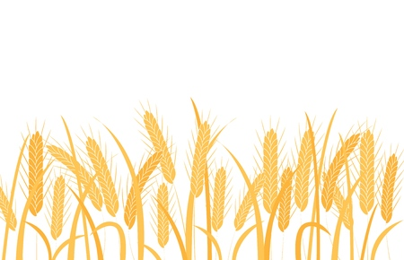 Golden wheat ears on stalks horizontal border frame in flat style isolated on white background - vector illustration of ripe dry cereal spikes with grain on stems with leaves. Vector Illustration