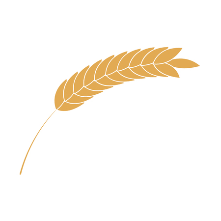 Cereal ear simple icon in flat style isolated on white background - ripe yellow wheat spike for bakery, organic farming food or beer design. Vector illustration of grain plant.