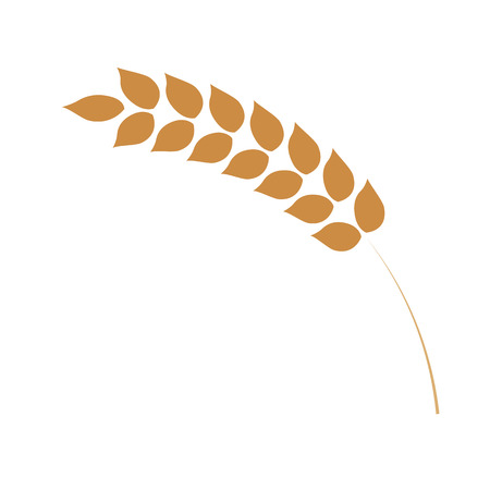 Cereal ear simple icon in flat style isolated on white background. Ripe yellow wheat spike for bakery, organic farming food or beer design - vector illustration of grain plant.