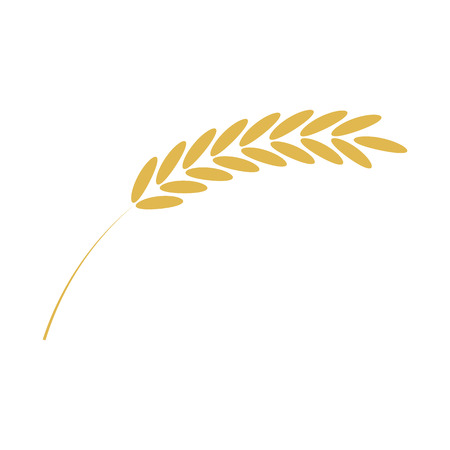 Vector illustration of cereal ear simple icon in flat style isolated on white background - ripe yellow spike of grain plant for bakery, organic farming food or beer design. Illustration