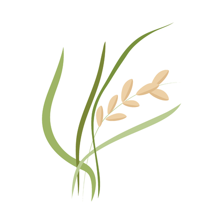 Ear of ripe rice grains on stem with green leaves in flat style - vector illustration of cereal plant isolated on white background. Raw natural organic healthy dietary product.